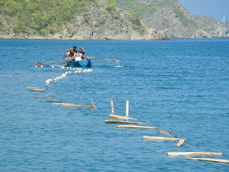 La pesca artesanal, labor taganguera viva en las Fiestas del Mar