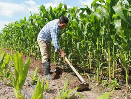 Pacto por la Ruralidad, nueva apuesta al campo, en Montería