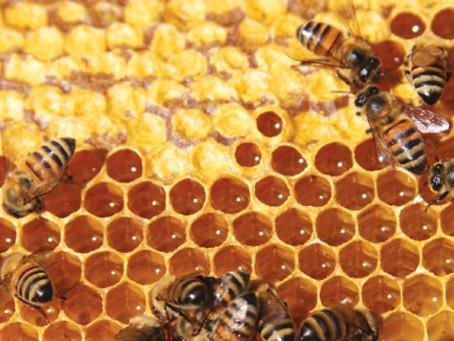 El bosque seco tropical de los Montes de María, epicentro de biodiversidad con la producción de miel