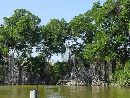 Ciénaga Grande de Santa Marta, tesoro natural con miras a su recuperación