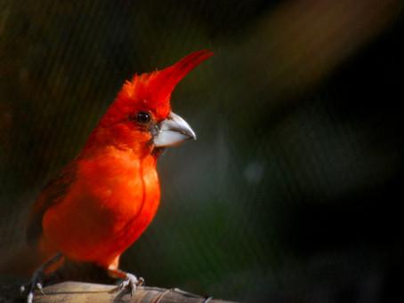 Santa Marta, un valle encantado de aves