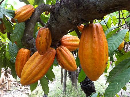 Desde Valencia – Córdoba, uno de los 50 mejores cacaos del mundo