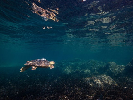 Aprender del océano para quererlo y protegerlo