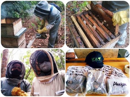En Tierralta - Córdoba, se realizan estudios en abejas para determinar causa de mortandad