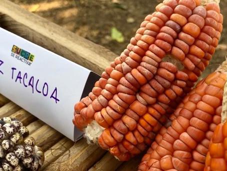 En San Antonio de Palmito, en Sucre, el maíz es de colores y cuenta con años de historia