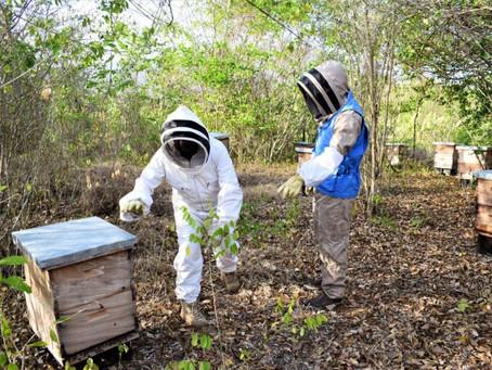 180 familias serán beneficiado con aprobación de proyecto de apicultura en Colosó Sucre