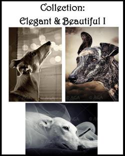 Elegant & Beautiful I