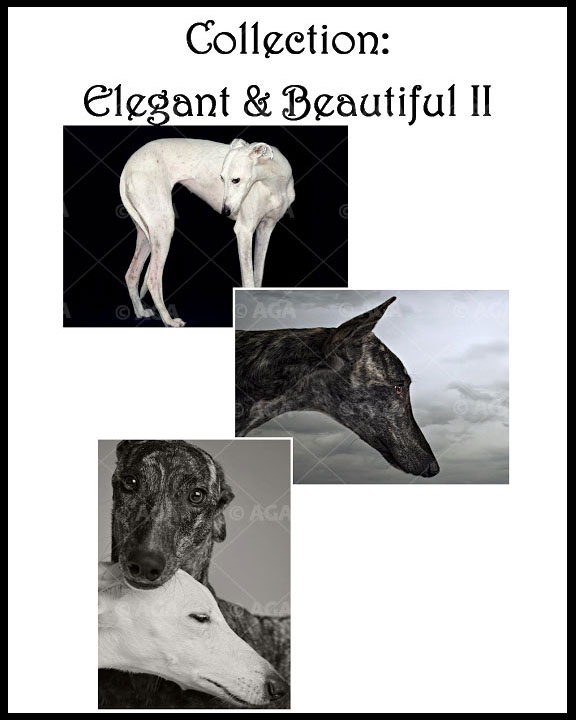 Elegant & Beautiful II