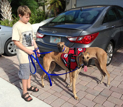 Service Dogs in Training