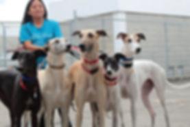 service dogs in training.jpg