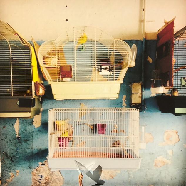 Bird'sWall_8746.jpg