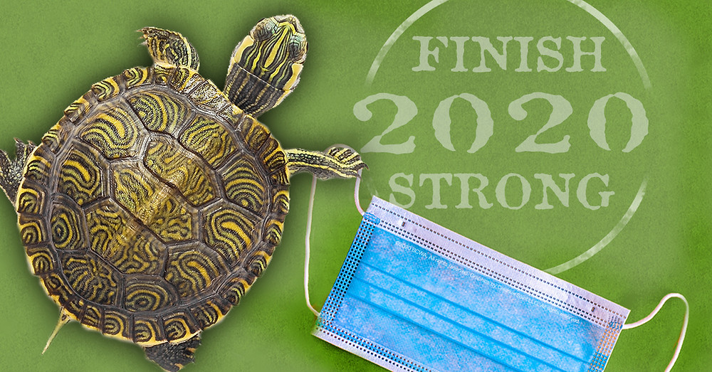 Turtle photographed from above walking over a medical mask on a solid greeen background, with the title FINISH STRONG in 2020.