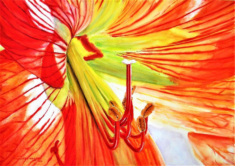 Amaryllis 3 70 x 52.JPG