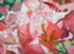 Bougainvilliers timides 70 x 52.JPG
