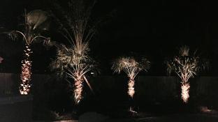 Landscape Lighting Cypress