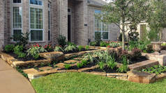 Landscaping Cypress