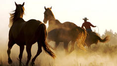 Gold Saddle - $750