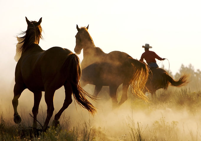 Cowboy en Wild Horses