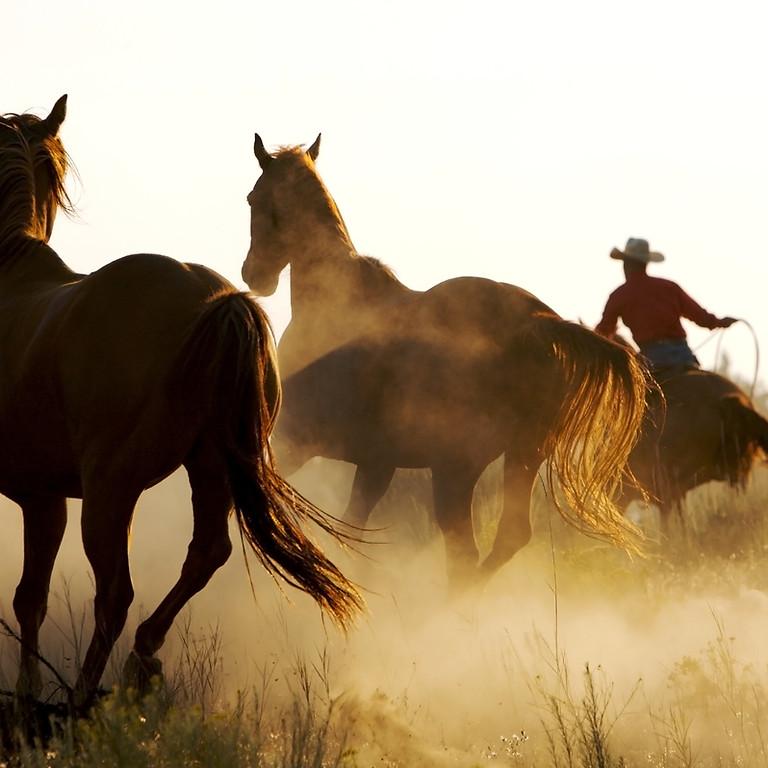Pferdeflüstern leicht gemacht