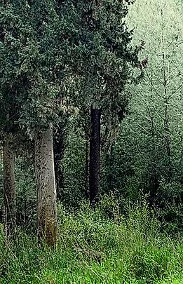 tree.webp