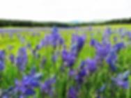 camas meadows.webp