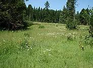 wet meadow.webp