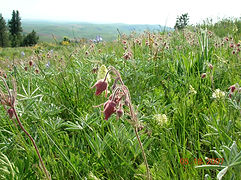 palouse prairie wildflowers.JPG