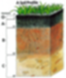 A Soil Profile.png