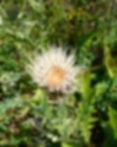 CIBR flower 3.JPG
