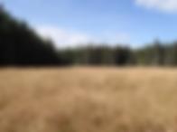 pasture.webp
