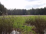 Wetland.webp