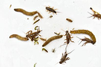 invertebrates.jpg