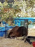 beaver spa.webp