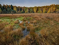 wetlandpic.webp