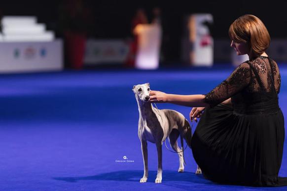 Lana BIG1 EUROPEAN DOG SHOW