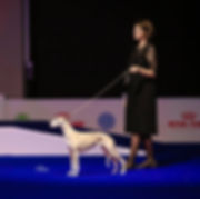 Lana BIG1 EUROPEAN DOG SHOW.jpg