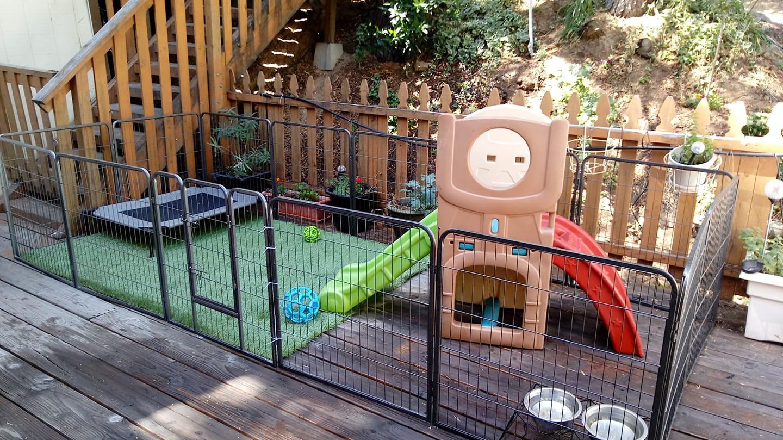 Puppy Play Space.jpg
