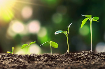 young-plant-growing-step-nature-sunshine