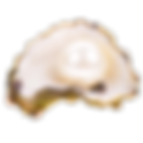 kisspng-oyster-pearl-seashell-stock-phot