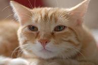 notniceguys-orange-cat-face.jpg