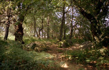 View of the oak forest. (photo: atelier José Neves)