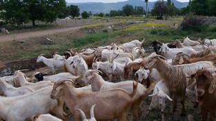 Ortak çalıstığımız çiftlik