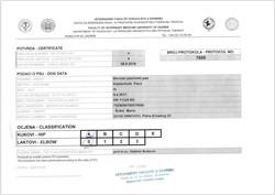 Exame de Displasia