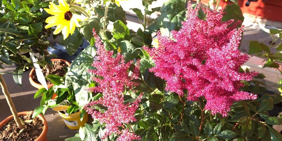 Lokal plantekurs for hageglade