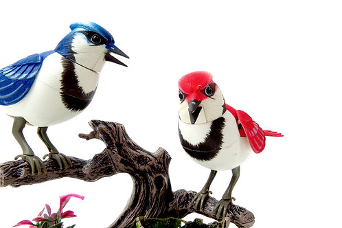 Singing & Chirping Birds - Realistic Sounds And Movements (Blue Jays)