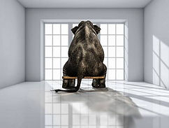 69903894-lonely-elephant-in-the-room-for