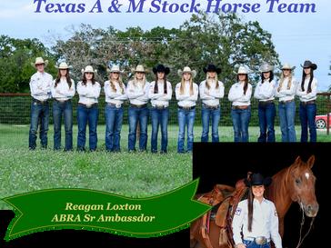 Reagan Loxton joins Texas A&M Stock Horse Team