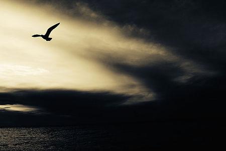 seagull-768785.jpg