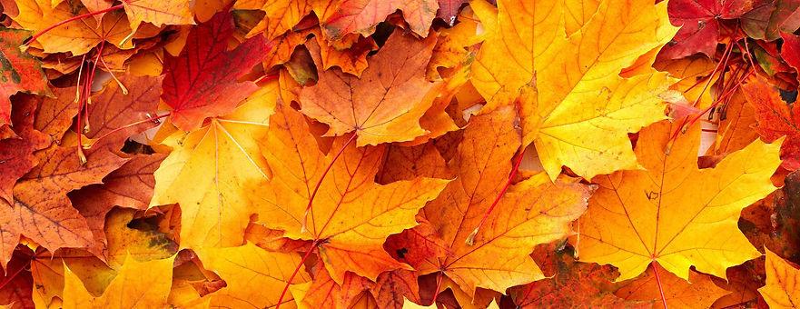 entete_automne.jpg