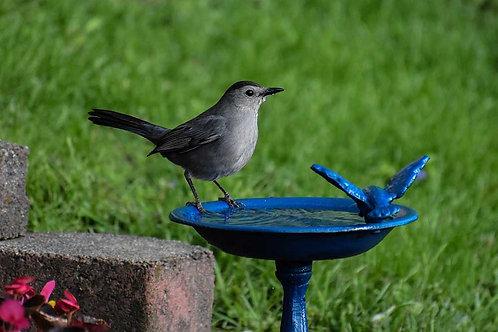 Fontaines à oiseaux